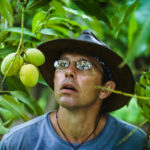 Curator of tropical fruit, Richard Campbell, mesmerized by a mango at the University of Florida, Tropical Research and Educational Center.