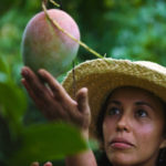 Curator of tropical fruit, Noris Ledesma, tenderly caressing a mango at the University of Florida, Tropical Research and Educational Center.